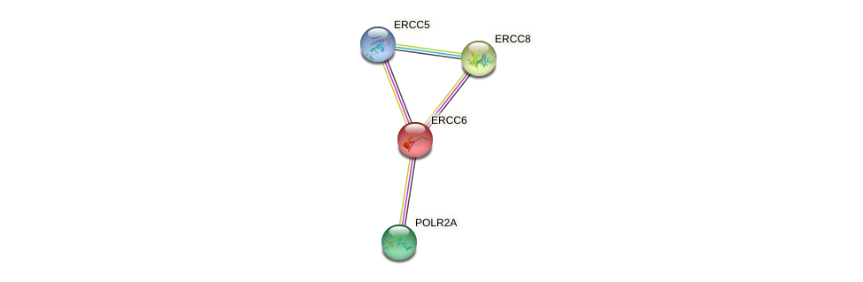 Protein-Protein network diagram for ERCC6