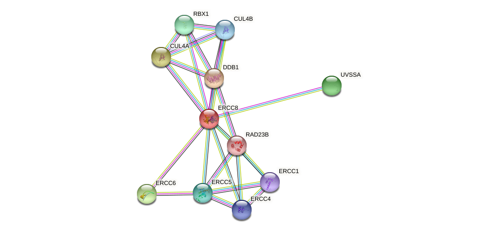 Protein-Protein network diagram for ERCC8