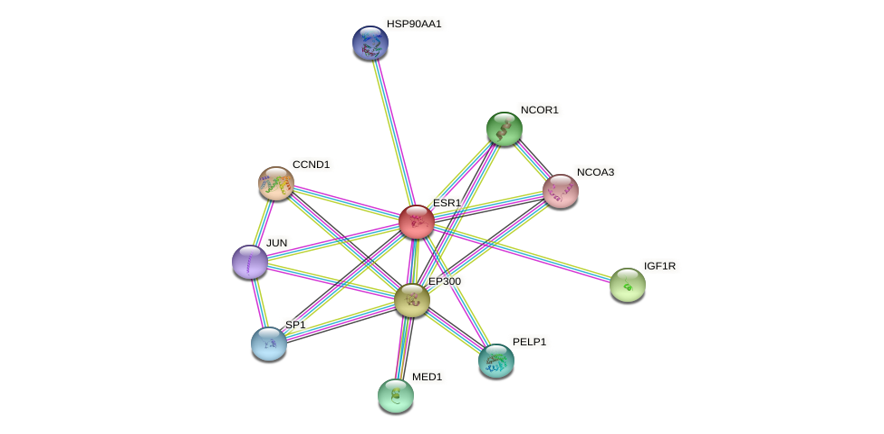 Protein-Protein network diagram for ESR1