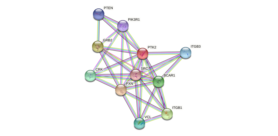 Protein-Protein network diagram for PTK2