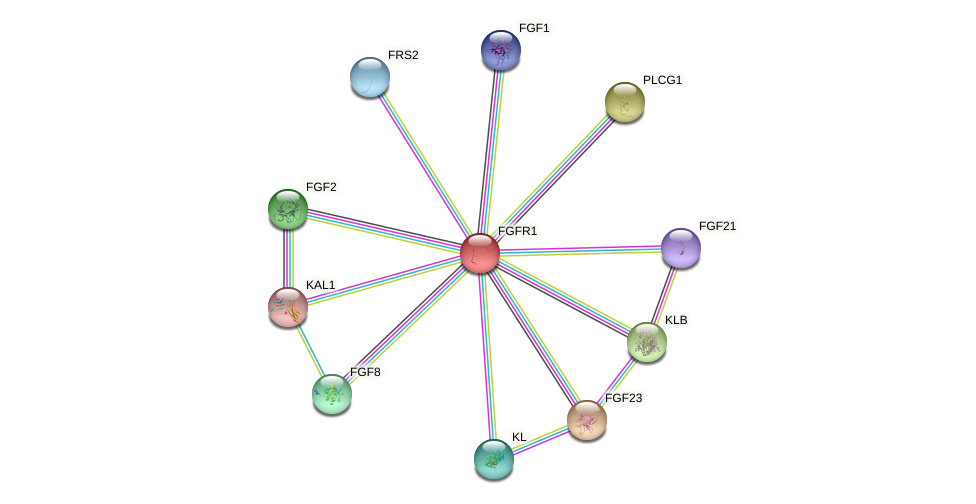 Protein-Protein network diagram for FGFR1
