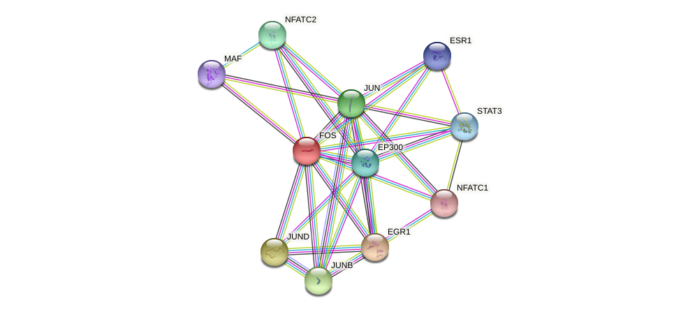 Protein-Protein network diagram for FOS