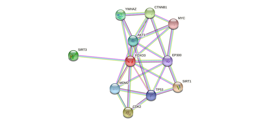 Protein-Protein network diagram for FOXO3