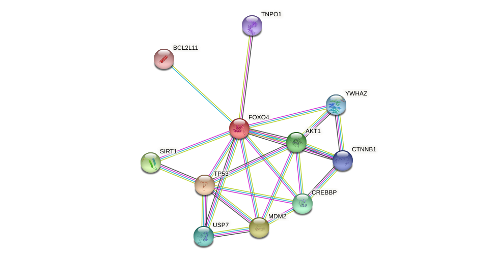 Protein-Protein network diagram for FOXO4