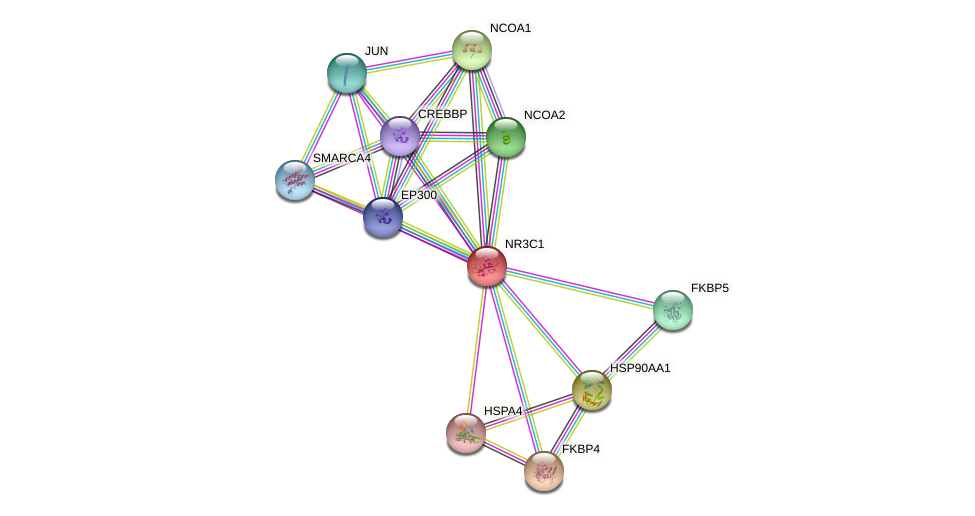 Protein-Protein network diagram for NR3C1