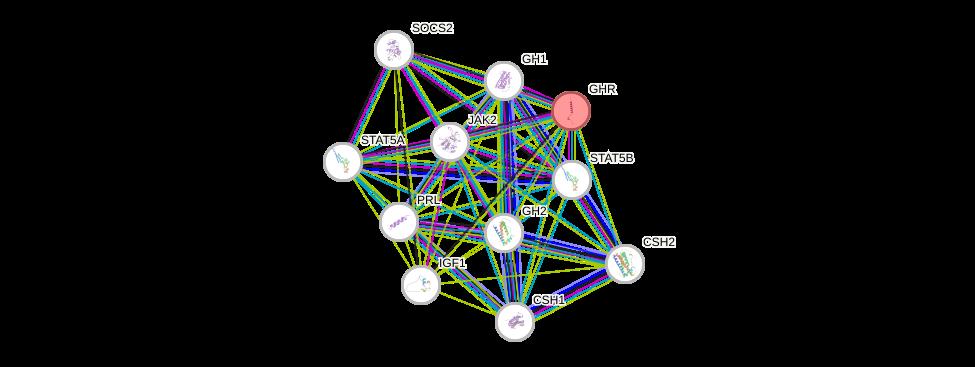Protein-Protein network diagram for GHR
