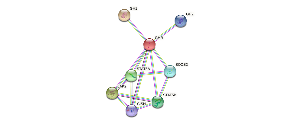 Protein-Protein network diagram for GHR