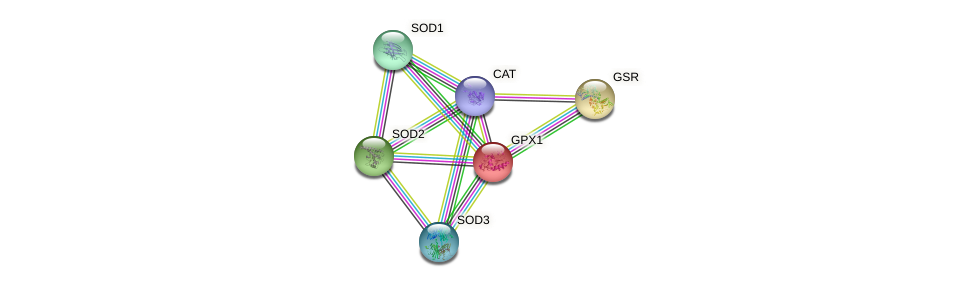 Protein-Protein network diagram for GPX1