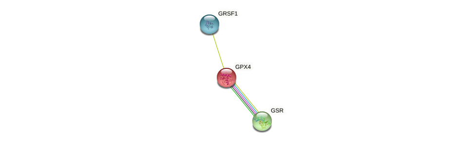 Protein-Protein network diagram for GPX4