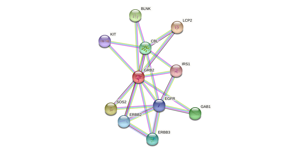 Protein-Protein network diagram for GRB2