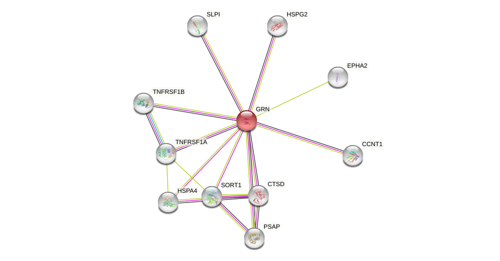 Protein-Protein network diagram for GRN