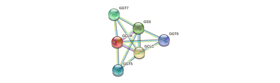 Protein-Protein network diagram for GCLM
