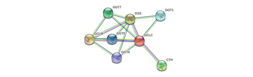 Protein-Protein network diagram for GCLC