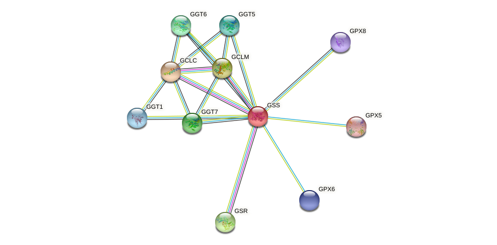 Protein-Protein network diagram for GSS