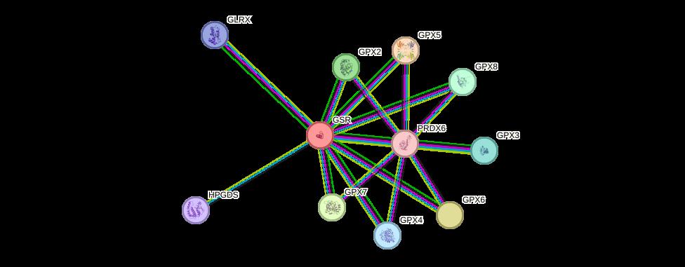 Protein-Protein network diagram for GSR