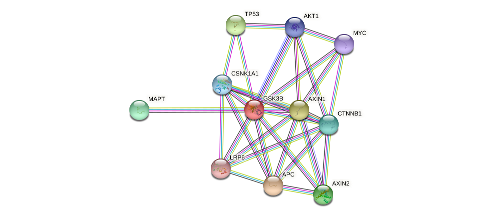 Protein-Protein network diagram for GSK3B