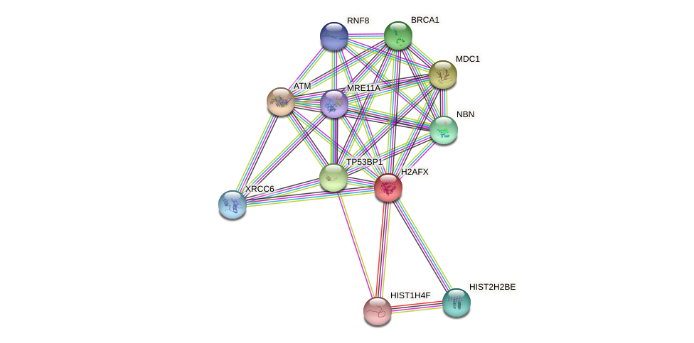 Protein-Protein network diagram for H2AFX