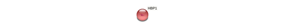 Protein-Protein network diagram for HBP1