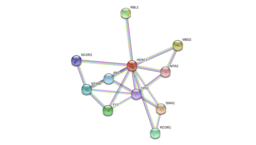 Protein-Protein network diagram for HDAC1