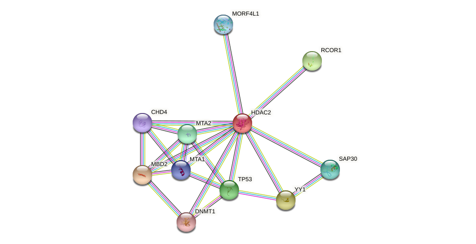 Protein-Protein network diagram for HDAC2