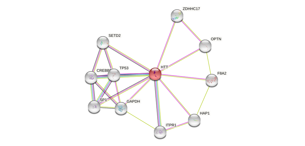 Protein-Protein network diagram for HTT