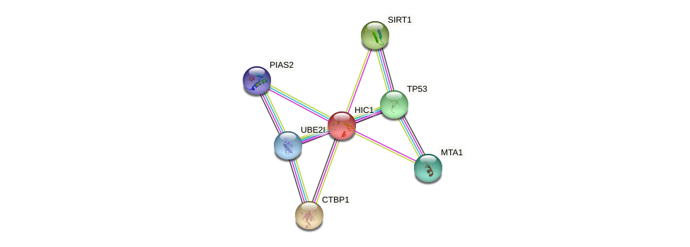 Protein-Protein network diagram for HIC1