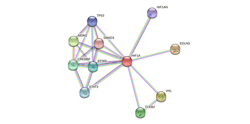 Protein-Protein network diagram for HIF1A