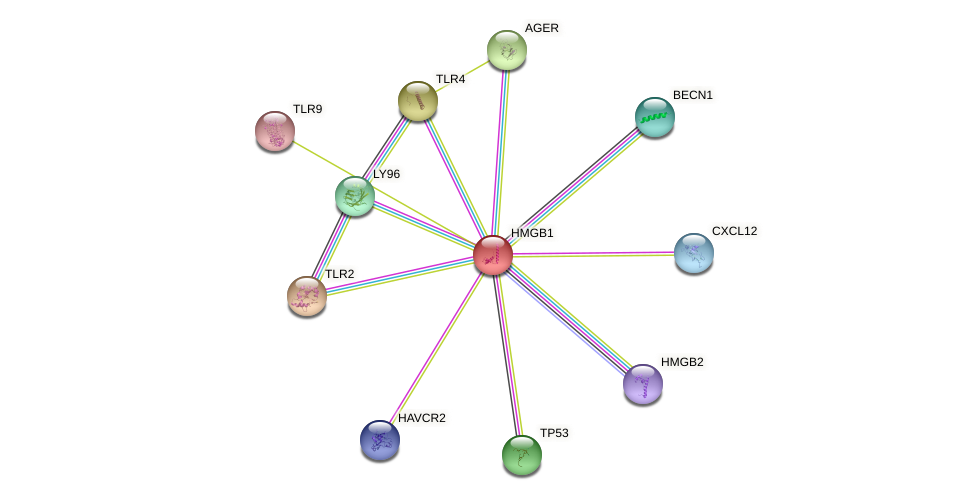 Protein-Protein network diagram for HMGB1