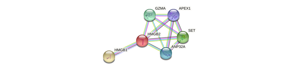 Protein-Protein network diagram for HMGB2