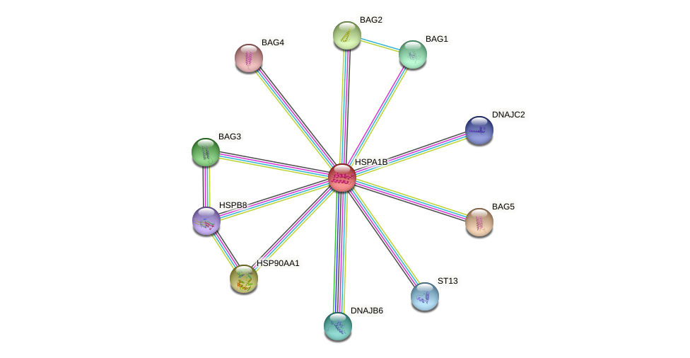 Protein-Protein network diagram for HSPA1A