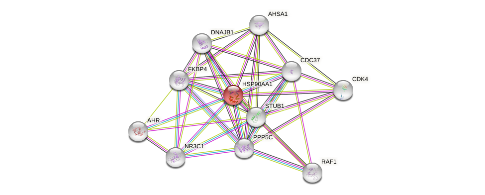 Protein-Protein network diagram for HSP90AA1