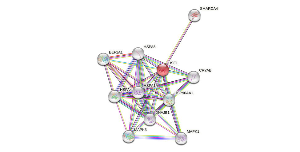 Protein-Protein network diagram for HSF1