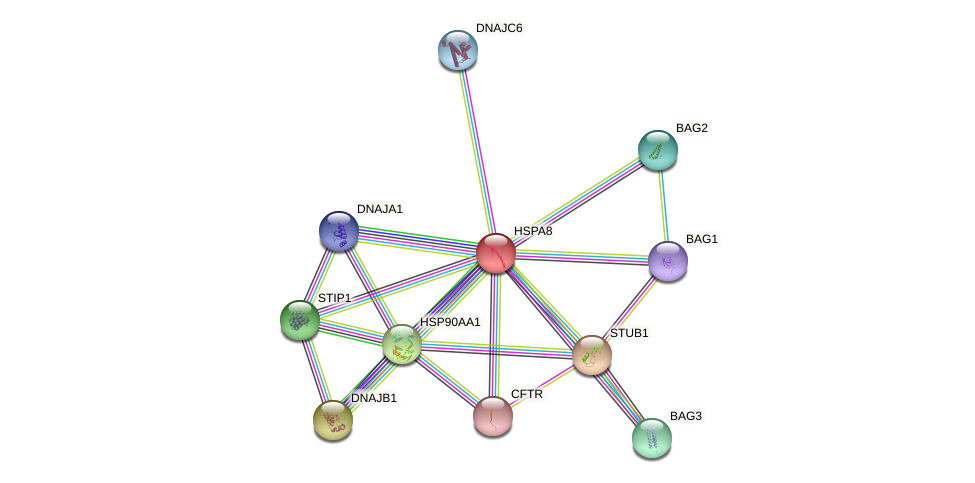 Protein-Protein network diagram for HSPA8