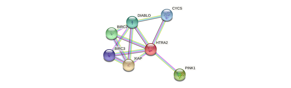 Protein-Protein network diagram for HTRA2