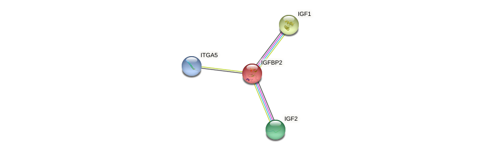 Protein-Protein network diagram for IGFBP2
