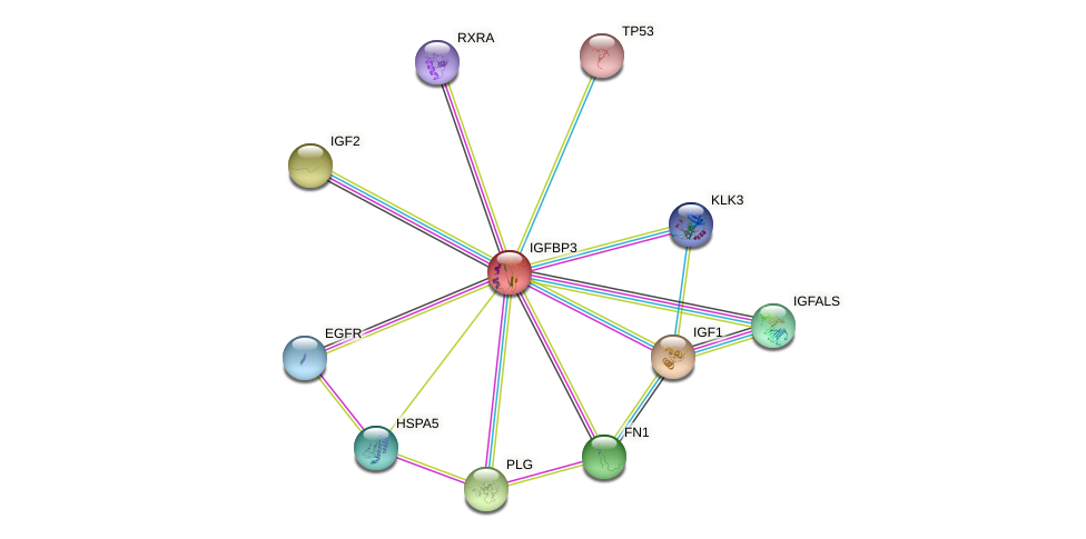 Protein-Protein network diagram for IGFBP3