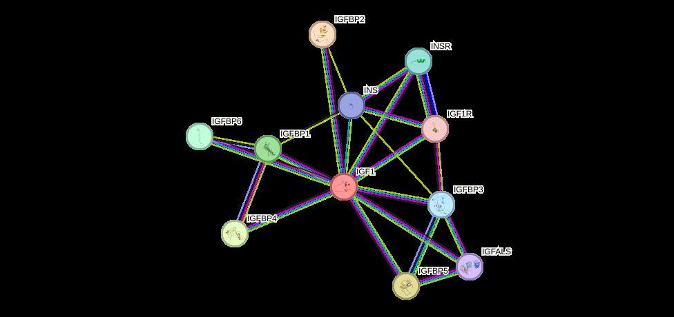 Protein-Protein network diagram for IGF1