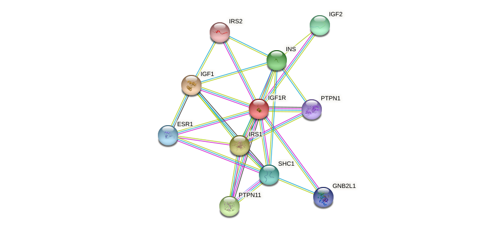 Protein-Protein network diagram for IGF1R