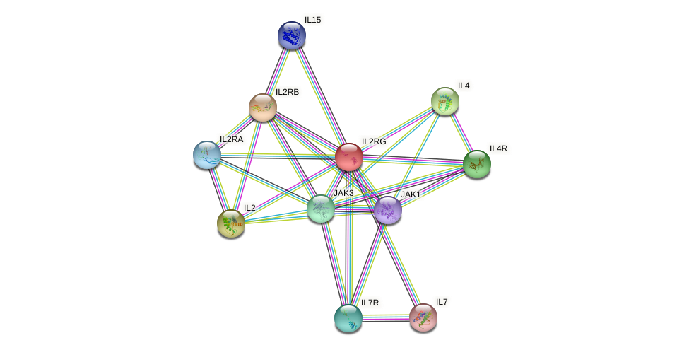 Protein-Protein network diagram for IL2RG