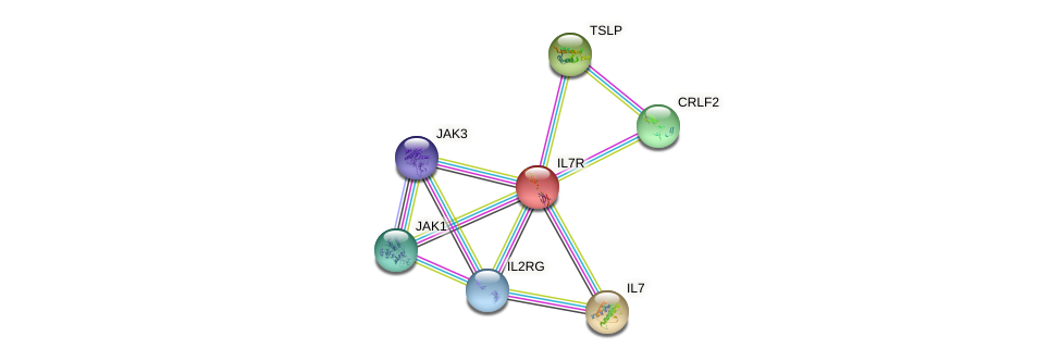 Protein-Protein network diagram for IL7R