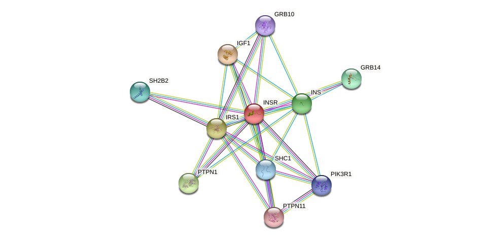 Protein-Protein network diagram for INSR