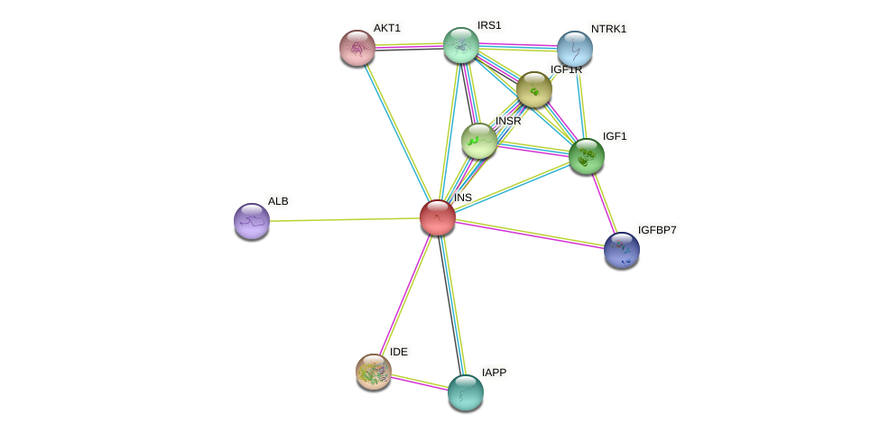 Protein-Protein network diagram for INS