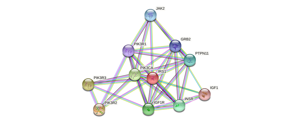 Protein-Protein network diagram for IRS1