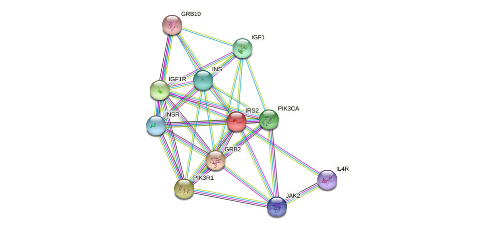 Protein-Protein network diagram for IRS2