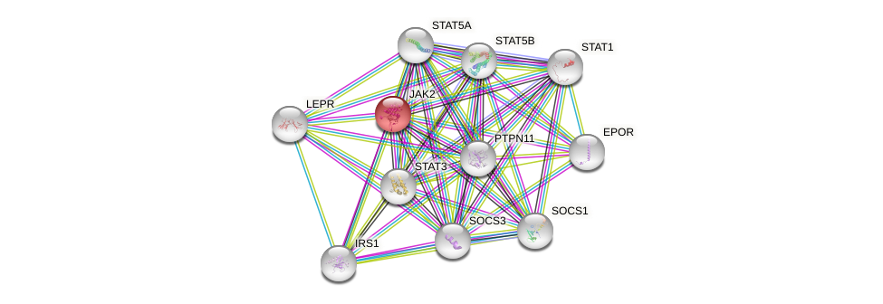 Protein-Protein network diagram for JAK2