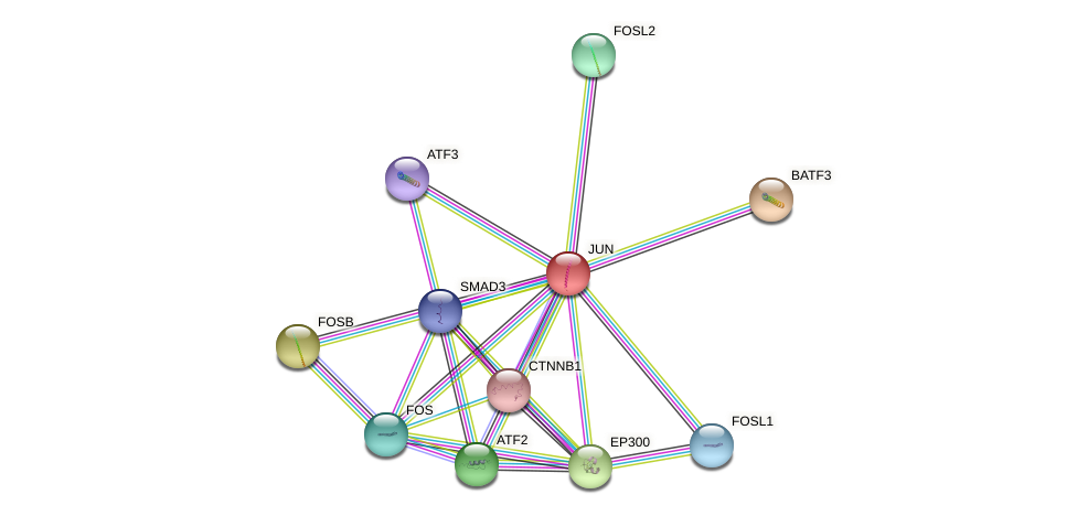Protein-Protein network diagram for JUN