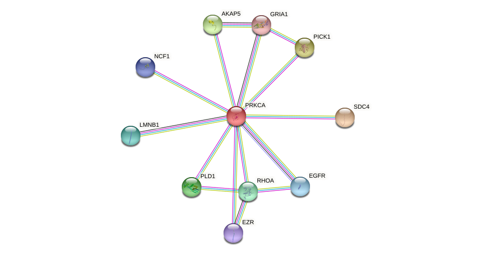 Protein-Protein network diagram for PRKCA
