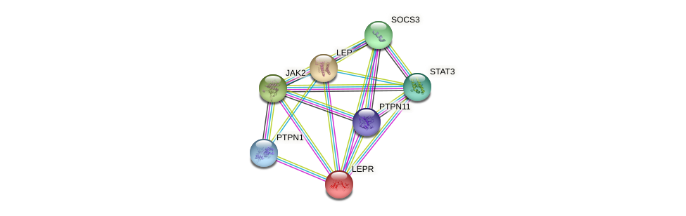 Protein-Protein network diagram for LEPR