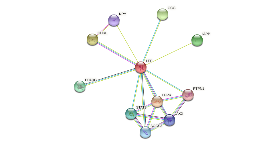 Protein-Protein network diagram for LEP