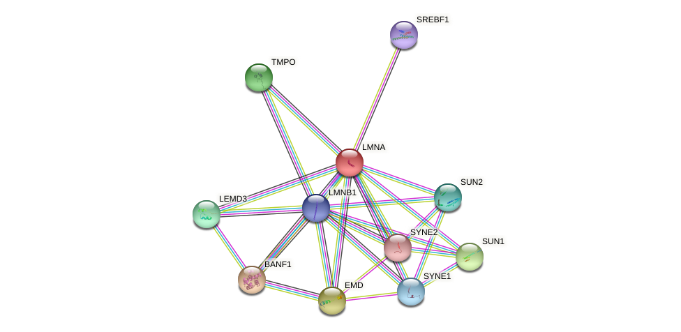 Protein-Protein network diagram for LMNA